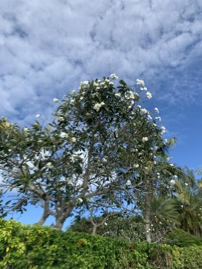 1年ぶりグアム‼︎プール中心の家族旅行‼︎②