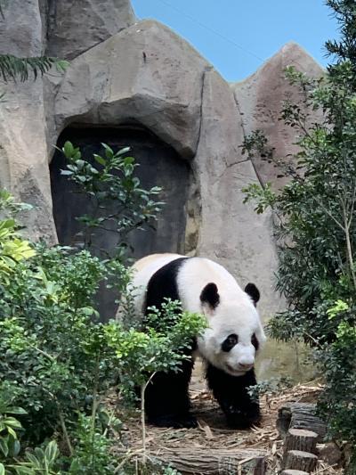 シンガポール2020/パンダに会いにリバーサファリ