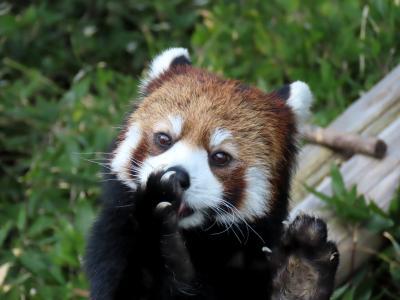 到津の森公園&福岡市動物園 2020新春の九州遠征最終日は到津と福岡・・・さすが、マリモちゃん!!リンゴタイムはアイドル・オンステージ!!