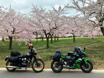 津軽_Tsugaru 半島周遊ツーリング!竜飛崎から黄金崎(不老ふ死温泉)を経て白神山地の青池へ