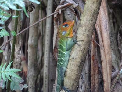 シンハラジャ森林保護区の昆虫☆爬虫類パラダイス