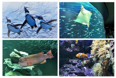 空飛ぶペンギンと水族館の仲間たち♪