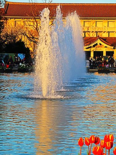 上野恩賜公園 竹の台噴水/夕日 東京国立博物館を背に ☆上野駅公園口-整備工事中