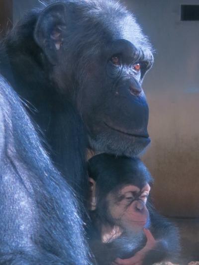 やっぱり動物はいいよな~ ※動物たちに癒される多摩動物公園※