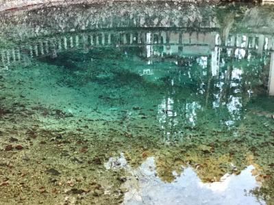 別府弁天池湧水を見に行ってみました