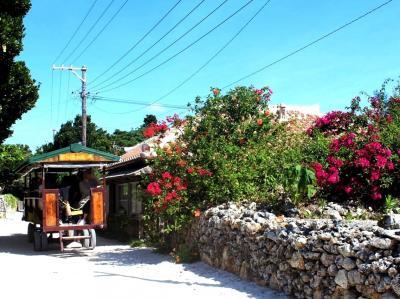 沖縄の原風景を残す島。水牛車でスローな時間を愉しむ。コンドイビーチ~西桟橋~カイジ浜☆サンゴ礁でできた伝統の島、竹富島へ♪