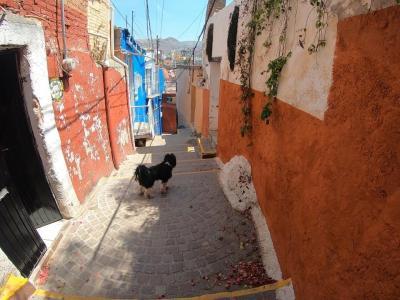 プラヤノルテに行きたい!メキシコの旅@グアナファト編