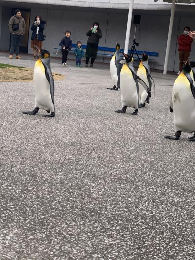ペンギンを愛でる帰省旅行☆1日目☆