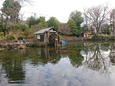 奇麗な公園を発見、すごく奇麗な湧水でした。