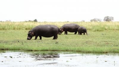 南部アフリカの旅②_チョベ国立公園にゲームドライブに
