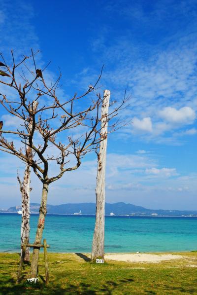 12月の沖縄旅、初ハレクラニと今帰仁村。