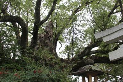 【2019/11】熊野古道中辺路ルートと田辺のいいとこ詰め合わせ旅/Day1