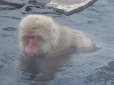 温泉に入るお猿さんに会いに、地獄谷野猿公苑へ +長野灯明まつり