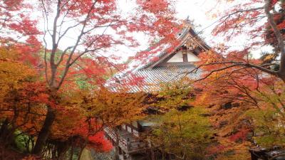 京都紅葉八景(5)神護寺と清滝川沿い
