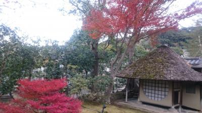 紅葉真っ只中!!京都ひとり旅…でもホテルは大津