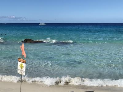 今年はハワイ島に行って来ました。