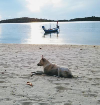 二十三年ぶりのコサムイ(サムイ島)~南の島でのんびり過ごした七日間~