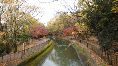 京都紅葉八景(6)山科のびわ湖疏水沿いを歩く
