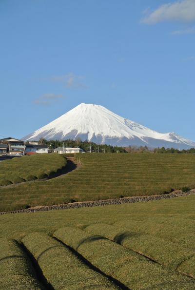 富士滞在 1月