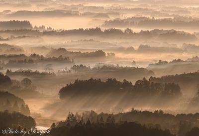 暖冬で晩秋のような朝霧の風景を求めて、霞ヶ浦近辺へ