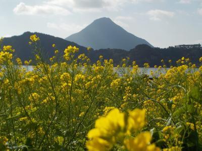 桜島と薩摩半島2泊3日。菜の花満開で、もう春満喫。②薩摩半島・指宿編