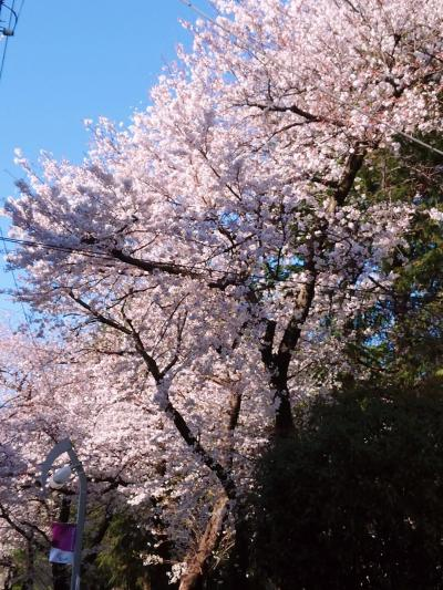 東京散歩♪ vol.53 January~February~March~April~☆