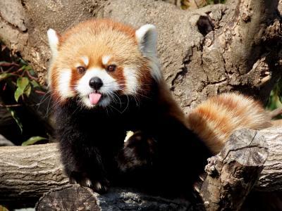王子動物園&神戸どうぶつ王国 昨年の反省を踏まえ1月&2月は近畿訪問強化月間!?まずは地元の兵庫県の2園を訪問です