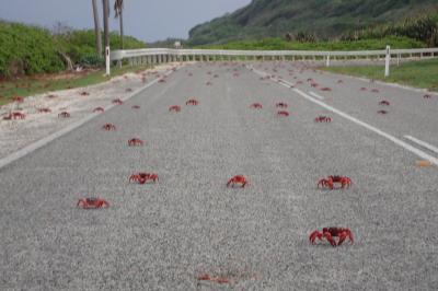 真っ赤なカニであふれるクリスマス島でサイクリングしてきた