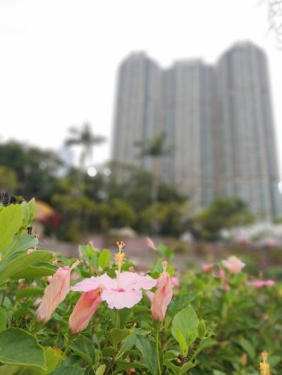 香港散策-5