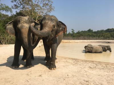 プノンクレーンの象の楽園に行ってきた。