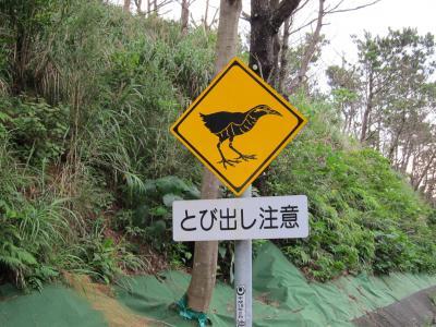 2014年6月沖縄旅行 ヤンバルクイナに会えたよ! 2日目