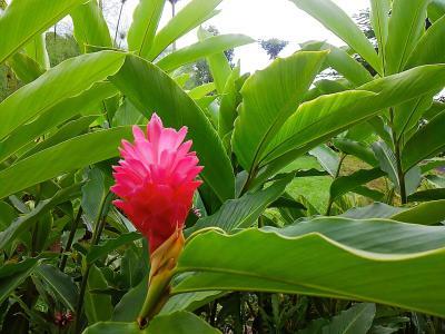 ドトールコーヒー農園&コナカイルア散策