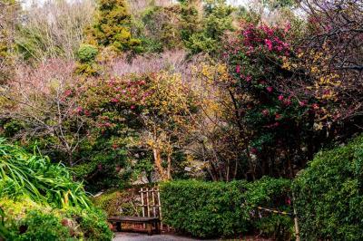 早春の白野江植物公園 2020