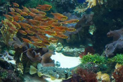 動物ずくめのシンガポールひとり旅 11 シーアクアリウム サンゴの庭の部