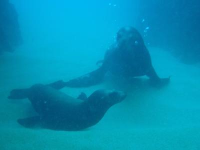 ビバ メヒコ カポ・サンルーカスでアシカとダイビングをしました