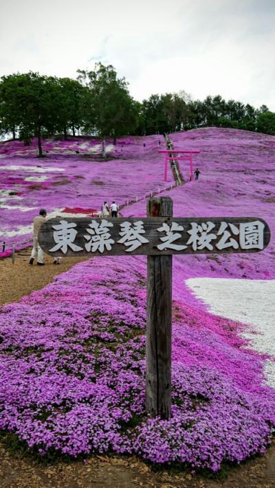 北海道1人旅  その1 芝桜とチューリップとすずらん