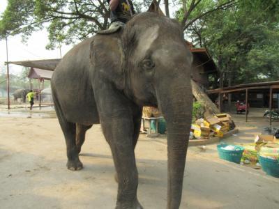 タイ バンコク・アユタヤ 友人旅