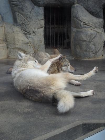 2020年 大阪城と天王寺動物園、ちょっとニガテだった(^^;)新世界