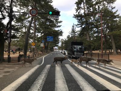 西国三十三所廻り始めました(^^)奈良の鹿さんに会いに行く♡第九番札所興福寺