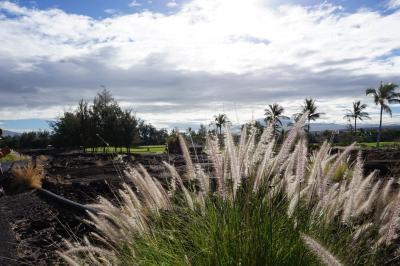 ハワイ島12日間 7日~8日目;カラパナ/プナ/HILO、ペトログリフ古代文字/KONA