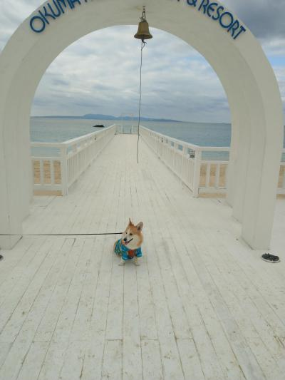 わんこ(犬)と一緒に冬の沖縄 オクマ プライベートビーチ&リゾート ホテル