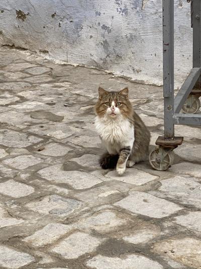 チュニジアで逢った猫たち