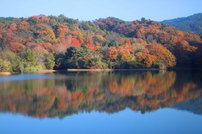 秋を求めてブラブラ散歩(粉河・紀美野・泉南・熊取・泉佐野・貝塚)