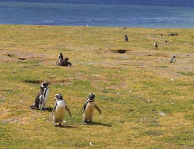 会心の晴れ続き、パタゴニア~ペンギンの島、マグダレナ島~