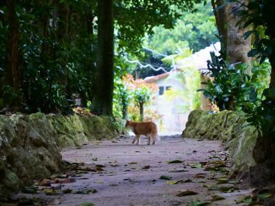 ['20沖縄旅] 備瀬のフクギ並木で絶品♡泡盛レーズンのガトーショコラ