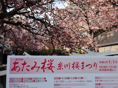 熱海梅園・第76回梅まつり & あたみ桜・第10回糸川桜まつり 2020