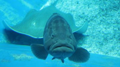 沖縄旅行2020 2日目午後 美ら海水族館 サンゴ礁~黒潮の海へ