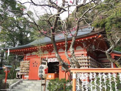 冬の鎌倉 花散歩:梅は咲いたか、桜はまだかいな?