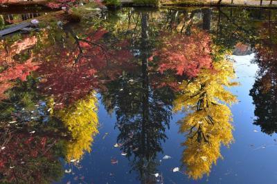 逆さもみじの曽木公園2019~池に映る夜の幻想的な世界、昼間の青空と紅葉も美しい(岐阜)