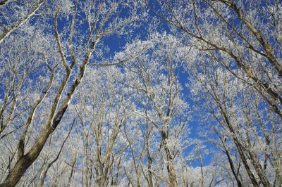 東京で雪山登山 冬の陣馬山~景信山~高尾山